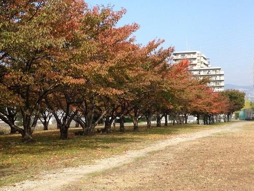 桜のトンネル秋.jpg