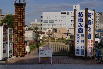 花摘み園.JPG