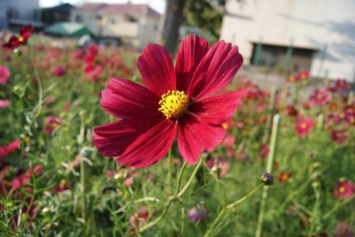花摘み園2.JPG