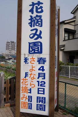 花摘み園22年3.JPG