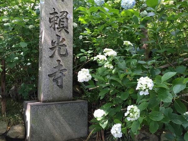 紫陽花寺3.jpg